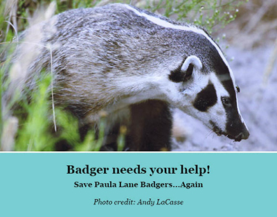 Badger needs your help!